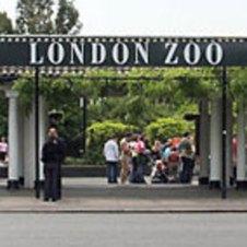 ldn-zoo