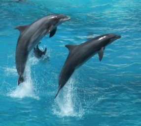 beautifuldeepocean-blogspot-com