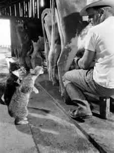 www-allposters-com-spcats