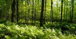 www-nature-orgourinitiatives
